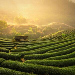 Fragrance Jardin d'Asie
